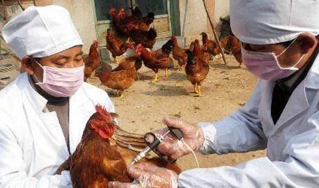 为什么你的养殖场总是小病不断?其实90%的病都是你自己造成的